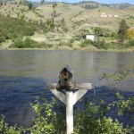 Salmon River at Swiftwater RV Park in White Bird, ID